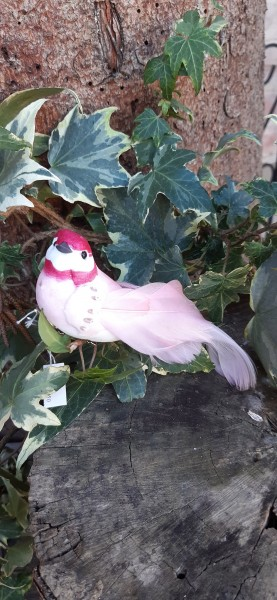 Klemmvogel Rosa