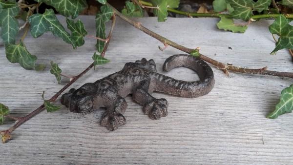 Salamander Klein